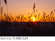 Закат в поле. Стоковое фото, фотограф Павел Годин / Фотобанк Лори