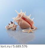 Ракушки. Стоковое фото, фотограф Елена Беззубцева / Фотобанк Лори