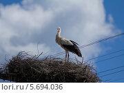 Аист на гнезде. Стоковое фото, фотограф Дмитрий Емушинцев / Фотобанк Лори