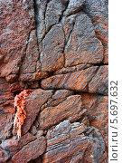 Купить «Каменная текстура, покрытая трещинами», фото № 5697632, снято 30 июня 2012 г. (c) Владимир Серебрянский / Фотобанк Лори