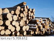 Купить «Сосновые бревна», фото № 5709612, снято 28 января 2014 г. (c) Дмитрий Калиновский / Фотобанк Лори