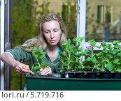Женщина пересаживает рассаду цветов в большой горшок. Стоковое фото, фотограф Куликов Константин / Фотобанк Лори