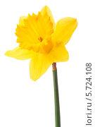 Купить «Желтый нарцисс», фото № 5724108, снято 9 мая 2013 г. (c) Natalja Stotika / Фотобанк Лори