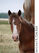 Купить «Портрет лошади», эксклюзивное фото № 5724924, снято 13 августа 2012 г. (c) Вероника / Фотобанк Лори