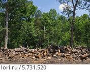 Купить «Участок заготовки леса в уссурийской тайге», фото № 5731520, снято 15 июля 2012 г. (c) Олег Рубик / Фотобанк Лори