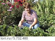 Купить «Женщина обрабатывает клубнику», фото № 5732480, снято 25 августа 2013 г. (c) EgleKa / Фотобанк Лори