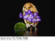 Купить «Узамбарская фиалка (Сенполия )», фото № 5734788, снято 22 марта 2014 г. (c) Ольга Денисова / Фотобанк Лори