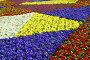 Разноцветные цветы примулы, фото № 5736504, снято 14 марта 2014 г. (c) Игорь Струков / Фотобанк Лори