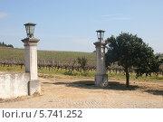 Окраина виноградника в Португалии (2012 год). Стоковое фото, фотограф Дмитрий Булатов / Фотобанк Лори