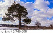 Купить «Дерево в поле, таймлапс», видеоролик № 5746608, снято 27 марта 2014 г. (c) Никита Майков / Фотобанк Лори