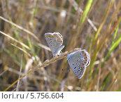 Бабочки на весенней траве. Стоковое фото, фотограф Константин Левада / Фотобанк Лори