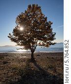 Абхазия берег моря. Стоковое фото, фотограф Анастасия Виноградова / Фотобанк Лори