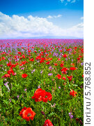 Поле красных маков и фиолетовых цветов. Стоковое фото, фотограф Сергей Новиков / Фотобанк Лори