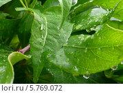 Дождевые капли. Стоковое фото, фотограф Наталья Кузнецова / Фотобанк Лори
