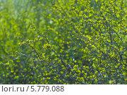Купить «Молодые зелёныё побеги в лучах солнца», эксклюзивное фото № 5779088, снято 5 апреля 2014 г. (c) Svet / Фотобанк Лори