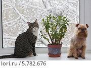 Купить «Кошка и собака на окне рядом с толстянкой», фото № 5782676, снято 1 апреля 2014 г. (c) Okssi / Фотобанк Лори