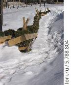 Живая изгородь, защищенная досками на зиму. Южно-Сахалинск. Стоковое фото, фотограф Елена Киселева / Фотобанк Лори