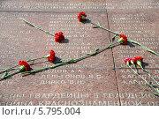 Купить «Гвоздики на гранитной плите», фото № 5795004, снято 10 апреля 2014 г. (c) Сергей Куров / Фотобанк Лори