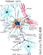 Купить «Рисунок: нервная сеть», иллюстрация № 5802408 (c) Агата Терентьева / Фотобанк Лори