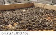 Пчелиный подмор. Стоковое фото, фотограф Денис Кошель / Фотобанк Лори