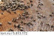 Мертвые пчелы на поверхности сот. Стоковое фото, фотограф Денис Кошель / Фотобанк Лори