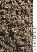 Мертвые пчелы. Стоковое фото, фотограф Денис Кошель / Фотобанк Лори