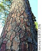 Интересная кора дерева в дендрарии Сочи. Стоковое фото, фотограф Кузьмина Марина / Фотобанк Лори