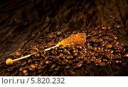 Кофейные зёрна сахар. Стоковое фото, фотограф Пётр Мусатов / Фотобанк Лори