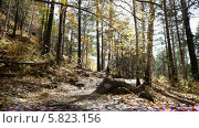 Купить «Осенний лес», видеоролик № 5823156, снято 5 января 2012 г. (c) Виталий Зверев / Фотобанк Лори