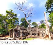 Старинные развалины Prasat Ta Prum в Камбодже. Стоковое фото, фотограф Nikolay Grachev / Фотобанк Лори