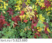 Осень. Стоковое фото, фотограф Константин Левада / Фотобанк Лори