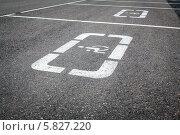Знак автомобильной парковки инвалидов на асфальте. Стоковое фото, фотограф Артем Мишуков / Фотобанк Лори