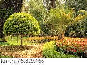Купить «Таиланд. Тропический сад Нонг Нуч (Nong Nooch)», фото № 5829168, снято 22 февраля 2014 г. (c) Алексей Сварцов / Фотобанк Лори