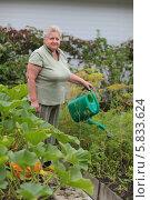Купить «Пожилая женщина поливает огород на дачном участке», фото № 5833624, снято 4 августа 2013 г. (c) Игорь Долгов / Фотобанк Лори