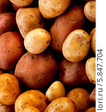 Купить «неочищенный картофель крупным планом», фото № 5847704, снято 2 октября 2012 г. (c) Food And Drink Photos / Фотобанк Лори