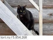 Купить «Чёрный кот», фото № 5854268, снято 18 апреля 2014 г. (c) yeti / Фотобанк Лори