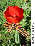 Георгиевская ленточка и тюльпан. Стоковое фото, фотограф Наташа Антонова / Фотобанк Лори