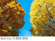 Осенние деревья на фоне голубого неба. Стоковое фото, фотограф Денис Веселов / Фотобанк Лори