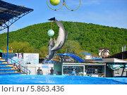 Купить «Представление с участием морских млекопитающих, дельфин афалина, Архипо-Осиповский дельфинарий», эксклюзивное фото № 5863436, снято 1 мая 2014 г. (c) Игорь Архипов / Фотобанк Лори