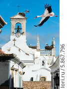 Купить «Белые аисты в городе Фару, Португалия», фото № 5867796, снято 8 апреля 2013 г. (c) Аnna Ivanova / Фотобанк Лори