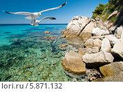 Купить «Чайки в полёте над каменистым морским берегом», фото № 5871132, снято 23 июня 2011 г. (c) Аnna Ivanova / Фотобанк Лори