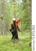 Купить «Лесоруб несет бревно огромной тяжести в северном лесу», фото № 5872052, снято 10 июля 2013 г. (c) Валерия Попова / Фотобанк Лори