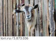 Купить «Любопытство не знает преград», фото № 5873036, снято 20 апреля 2014 г. (c) Паровышник Наталья / Фотобанк Лори