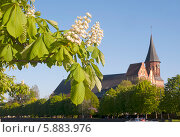 Купить «Каштаны, цветущие на набережной, на фоне кафедрального собора. Фокус на ветке», эксклюзивное фото № 5883976, снято 29 апреля 2014 г. (c) Svet / Фотобанк Лори