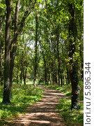 Тропинка между зеленых деревьев. Стоковое фото, фотограф Денис Веселов / Фотобанк Лори