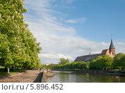 Купить «Цветущие каштаны на набережной. Калининград», эксклюзивное фото № 5896452, снято 11 мая 2014 г. (c) Svet / Фотобанк Лори