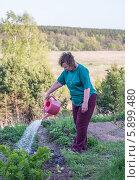 Пожилая женщина поливает грядку на дачном участке. Стоковое фото, фотограф Екатерина Радомская / Фотобанк Лори