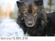 Преданный взгляд собаки. Стоковое фото, фотограф Светлана Пальцева / Фотобанк Лори