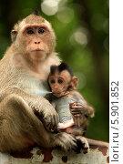 Семья обезьян (2014 год). Стоковое фото, фотограф Морозова Татьяна / Фотобанк Лори