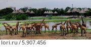 Жирафы. Стоковое фото, фотограф Юлия Дроздова / Фотобанк Лори